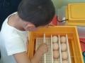 P4_installation de la couveuse pour les oeufs fécondés